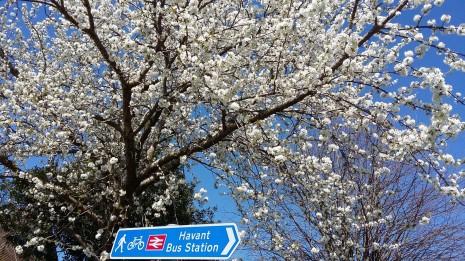Havant Park in spring